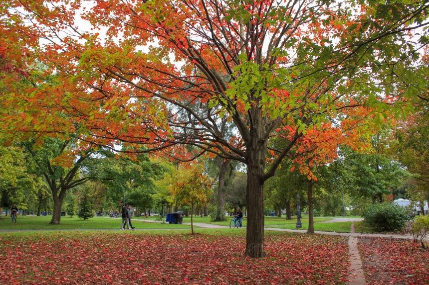 1. Trinity Bellwoods Park